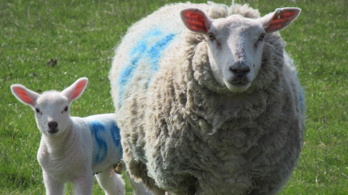 Wot Ewe Looking At?